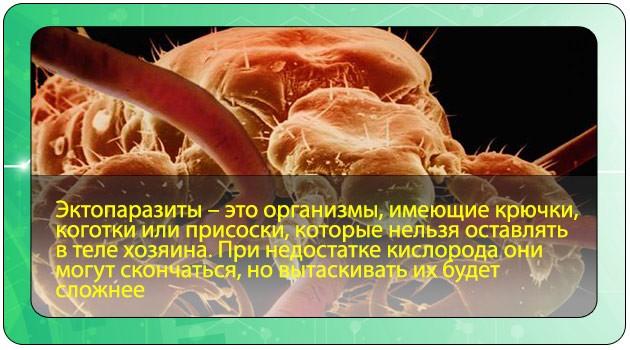 Эктопаразиты