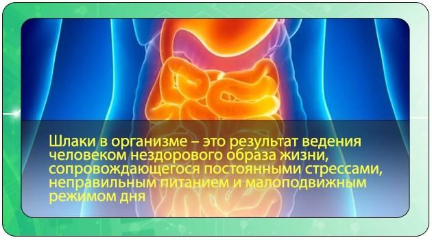 Токсины и шлаки в организме