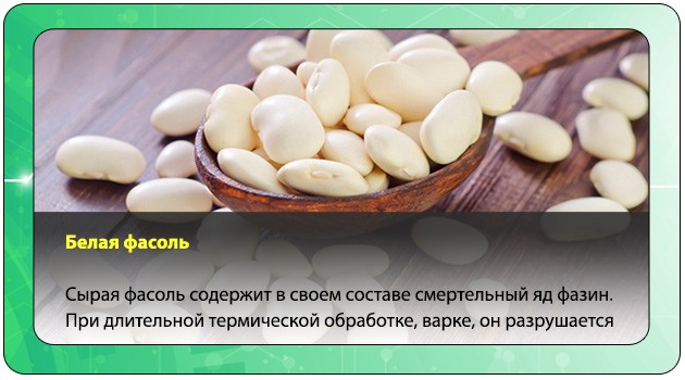 Белая фасоль