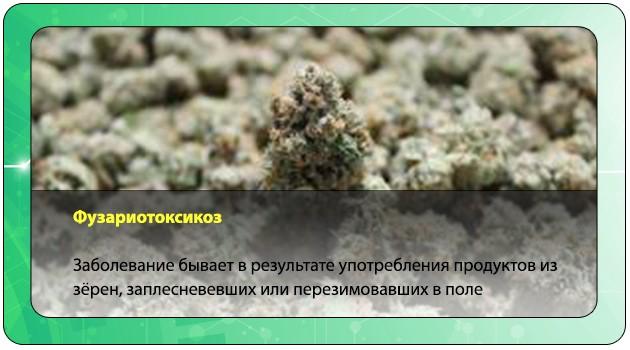 Фузариотоксикоз