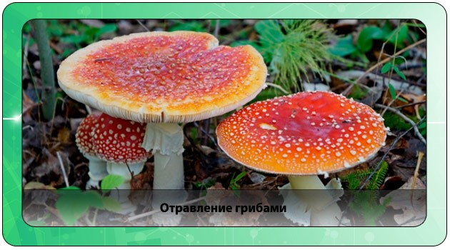Интоксикация грибами