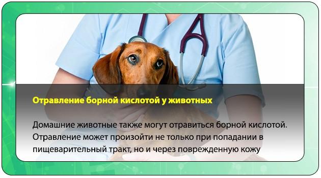 Интоксикация у животных