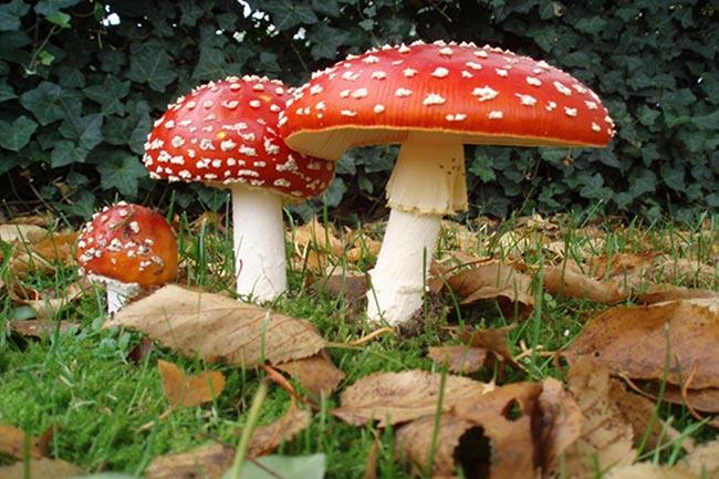 Отравление грибами