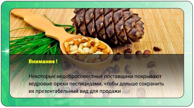 Пестициды в кедровых орехах