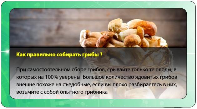 Правильный сбор грибов