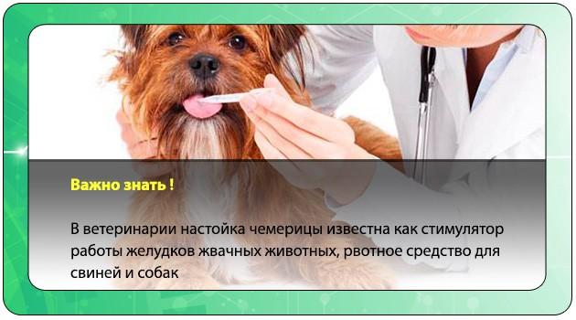 Применение кукольника в ветеринарии