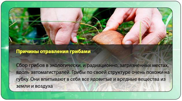 Сбор грибов в загрязненных местах