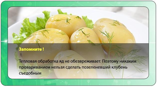 Интоксикация зеленым картофелем