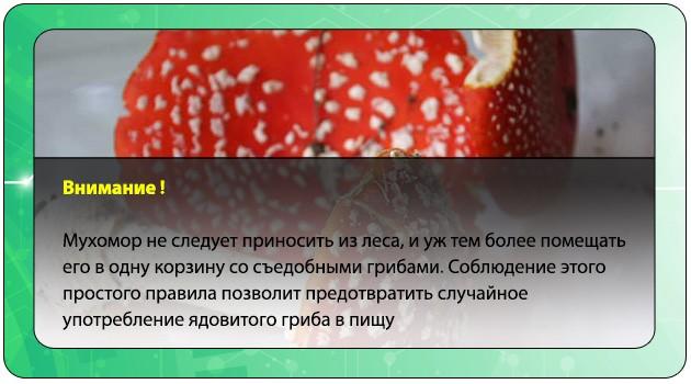 Профилактика отравления мухомором