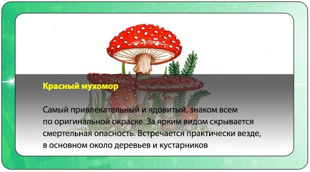 Красный мухомор
