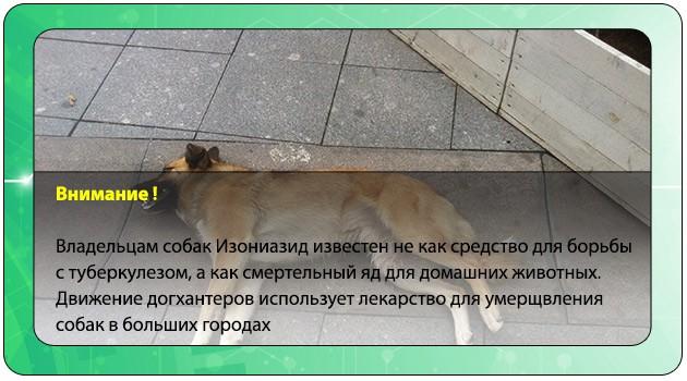 Мертвая у собака