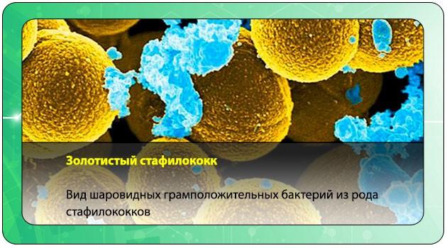 Золотистый стафилококк