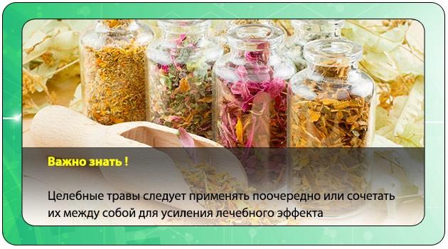 Травяные сборы для печени