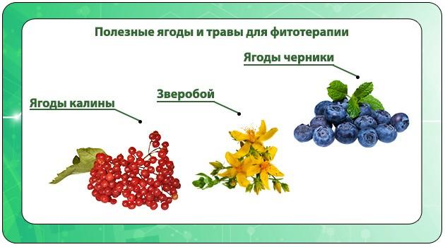 Полезные ягоды и травы для фитотерапии при ротавирусе