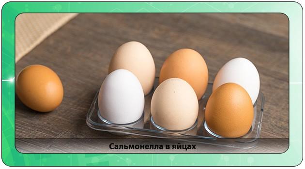 Сальмонелла в яйцах