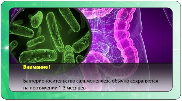 Бактерионосительство сальмонеллеза