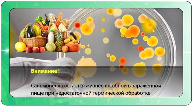 Сальмонелла в пищевых продуктах